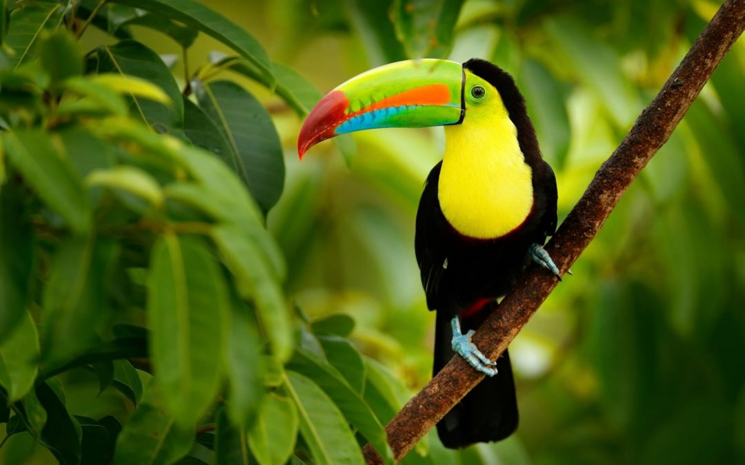 Costa Rica Stage de survie
