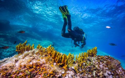 Croatie Plongée sur l'île de Murter