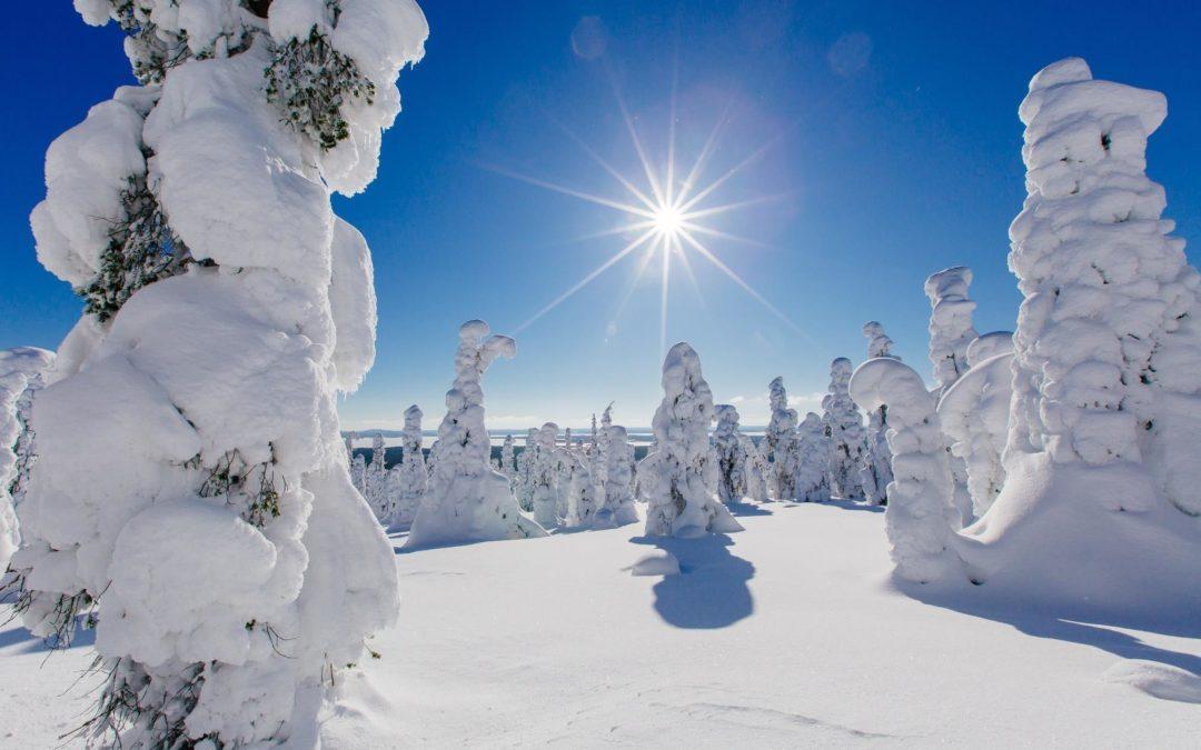 Suède Detox en Forêt