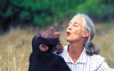 Tanzanie A la Rencontre des Chimpanzés